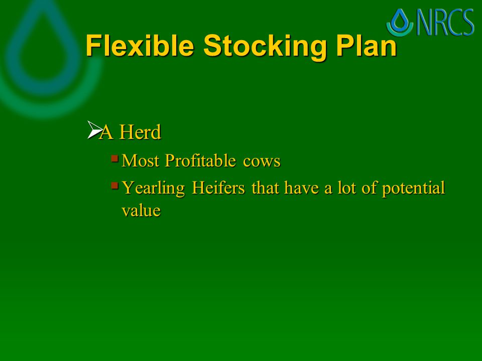 Flexible Stocking Plan  A Herd  Most Profitable cows  Yearling Heifers that have a lot of potential value