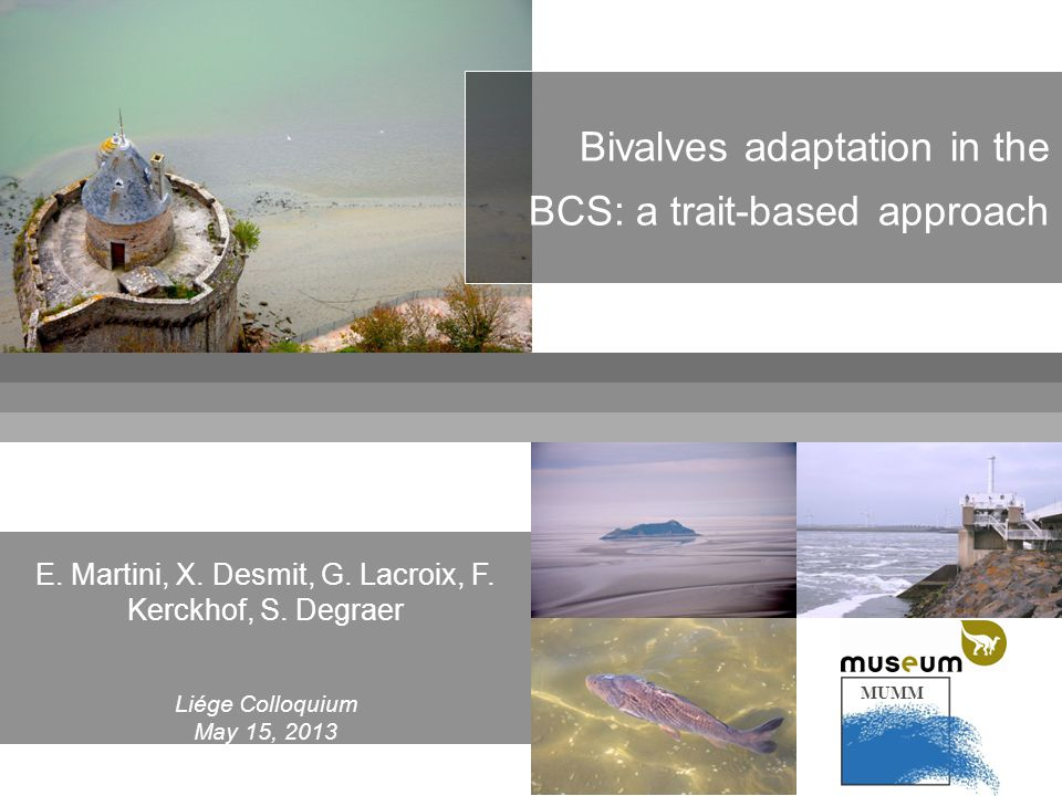MUMM Bivalves adaptation in the BCS: a trait-based approach E. Martini, X. Desmit, G. Lacroix, F. Kerckhof, S. Degraer Liége Colloquium May 15, 2013