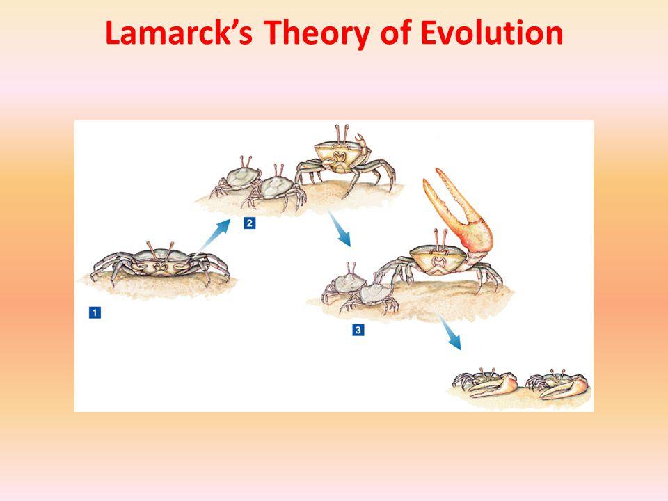 Population Growth Economist Thomas Malthus also influenced Darwin.