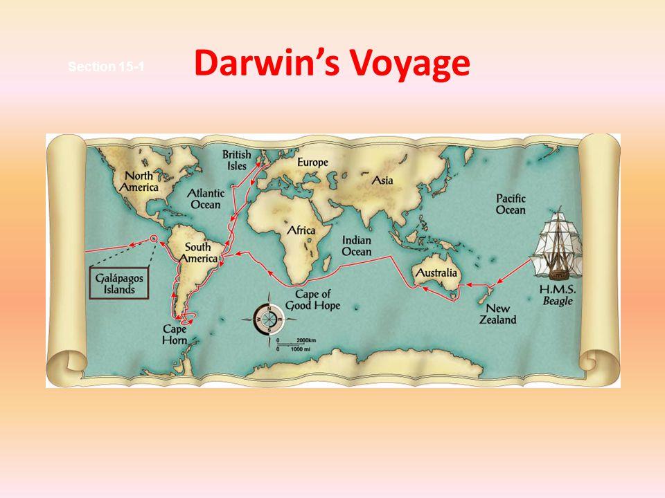 Darwin's Observations Darwin observed many organisms.