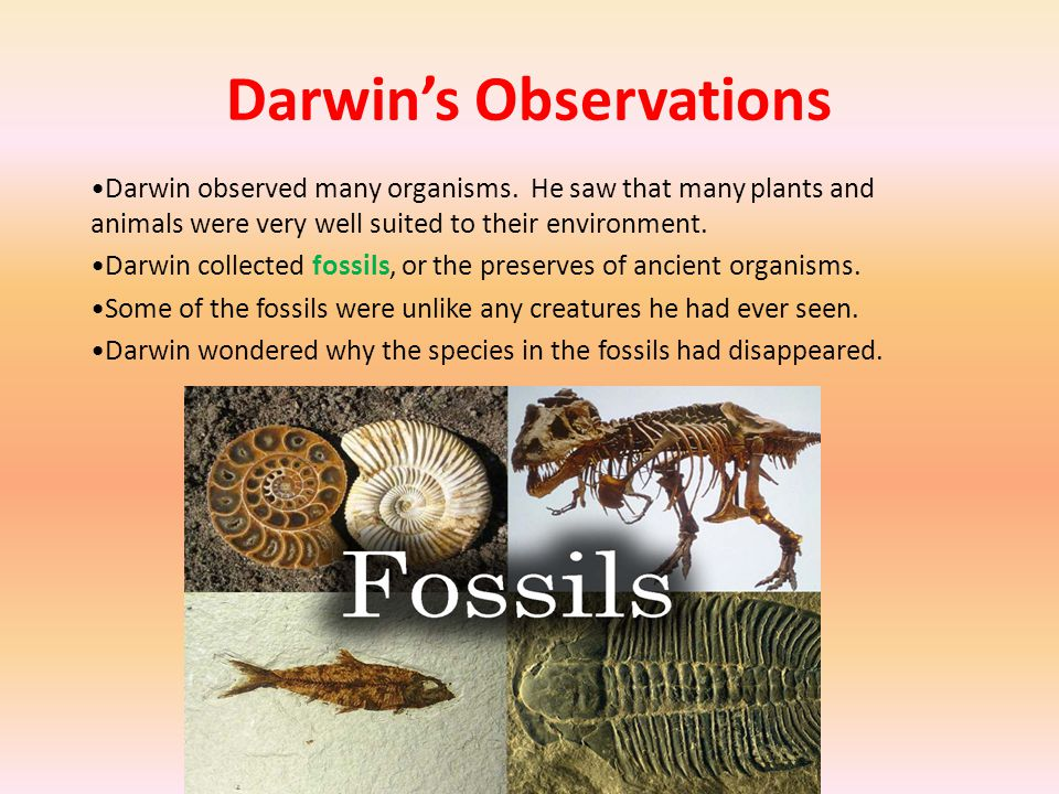 Darwin's Observations Darwin's observation on the Galapagos Islands (group of small islands west of South America) influenced him the most.