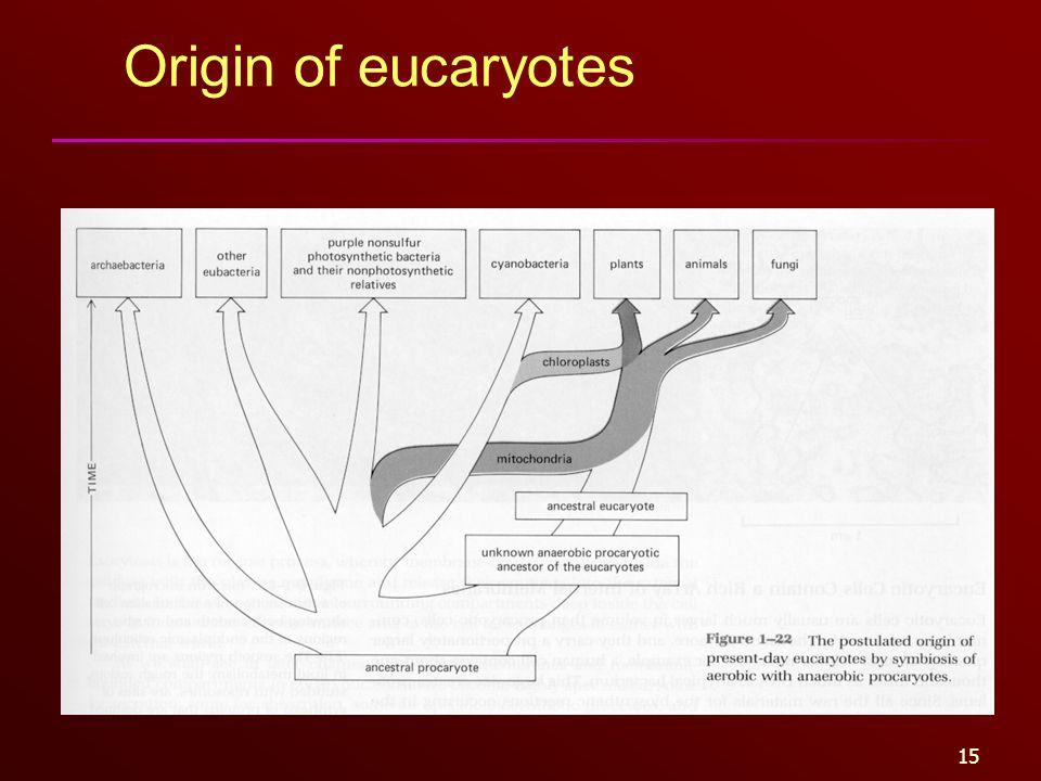 15 Origin of eucaryotes