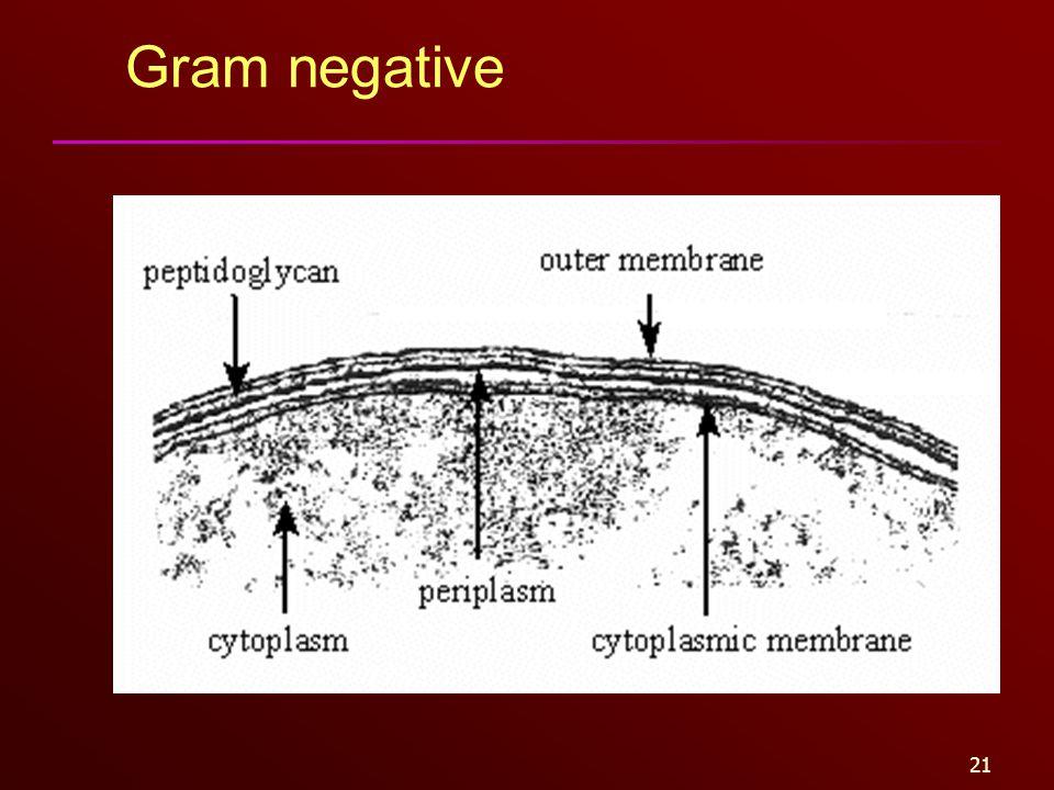21 Gram negative
