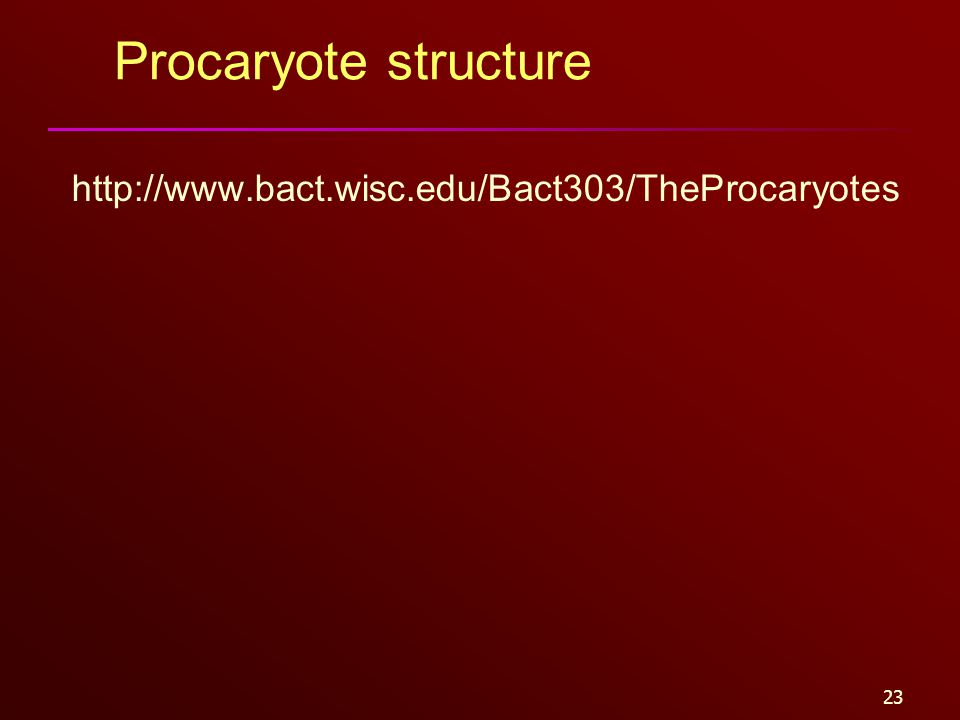 23 Procaryote structure http://www.bact.wisc.edu/Bact303/TheProcaryotes