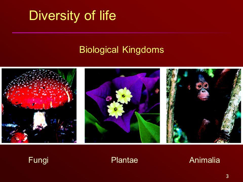 3 Diversity of life FungiPlantaeAnimalia Biological Kingdoms