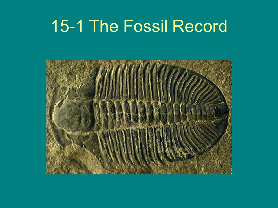 15-1 The Fossil Record