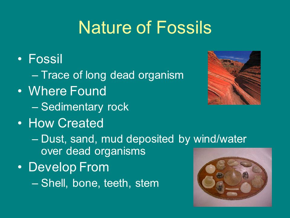 Nature of Fossils Fossil –Trace of long dead organism Where Found –Sedimentary rock How Created –Dust, sand, mud deposited by wind/water over dead organisms Develop From –Shell, bone, teeth, stem