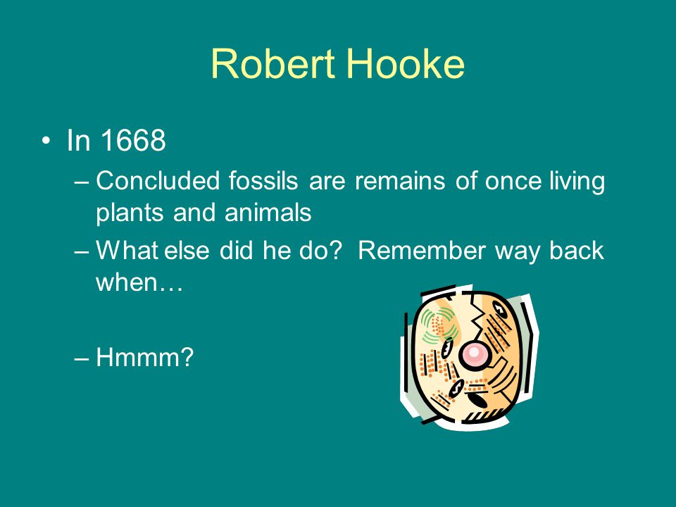 Robert Hooke In 1668 –Concluded fossils are remains of once living plants and animals –What else did he do.