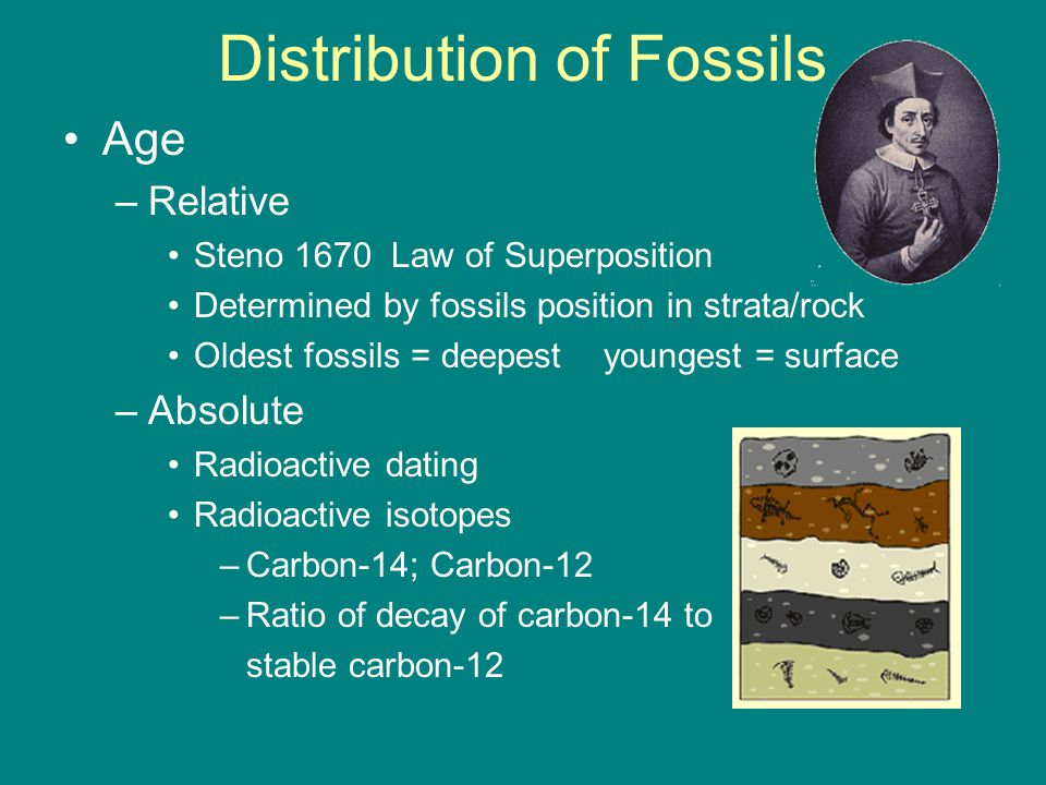Distribution of Fossils Age –Relative Steno 1670 Law of Superposition Determined by fossils position in strata/rock Oldest fossils = deepest youngest = surface –Absolute Radioactive dating Radioactive isotopes –Carbon-14; Carbon-12 –Ratio of decay of carbon-14 to stable carbon-12