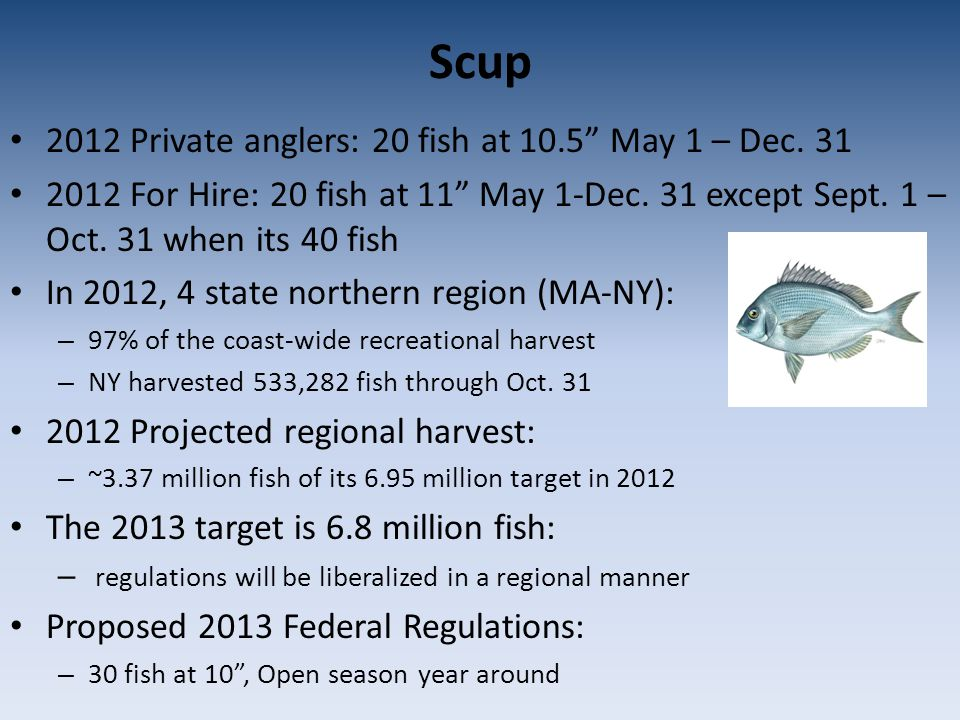 Scup 2012 Private anglers: 20 fish at 10.5 May 1 – Dec.