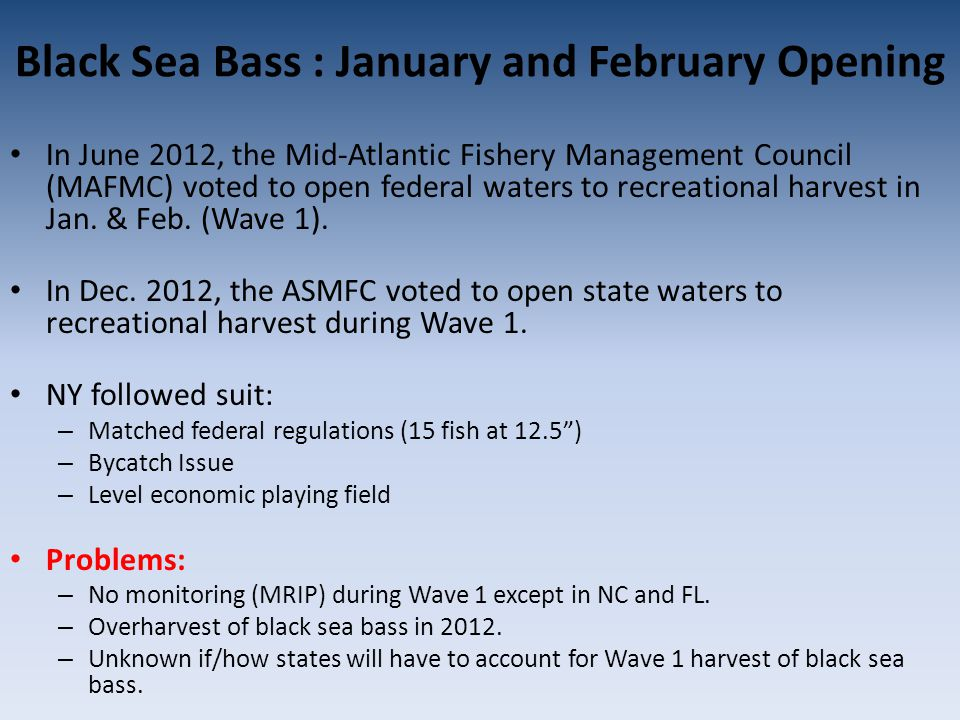 Black Sea Bass : January and February Opening In June 2012, the Mid-Atlantic Fishery Management Council (MAFMC) voted to open federal waters to recreational harvest in Jan.