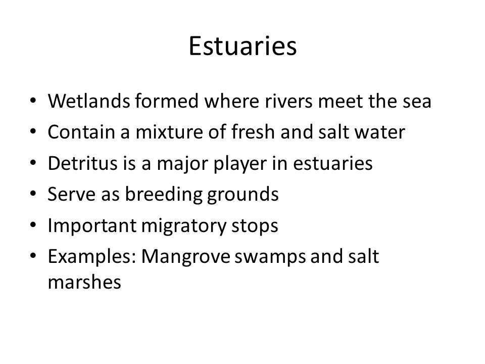 Estuaries Wetlands formed where rivers meet the sea Contain a mixture of fresh and salt water Detritus is a major player in estuaries Serve as breeding grounds Important migratory stops Examples: Mangrove swamps and salt marshes