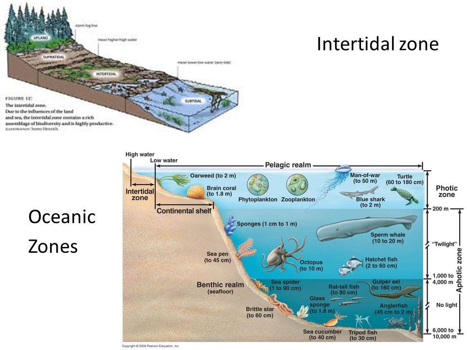 Intertidal zone Oceanic Zones