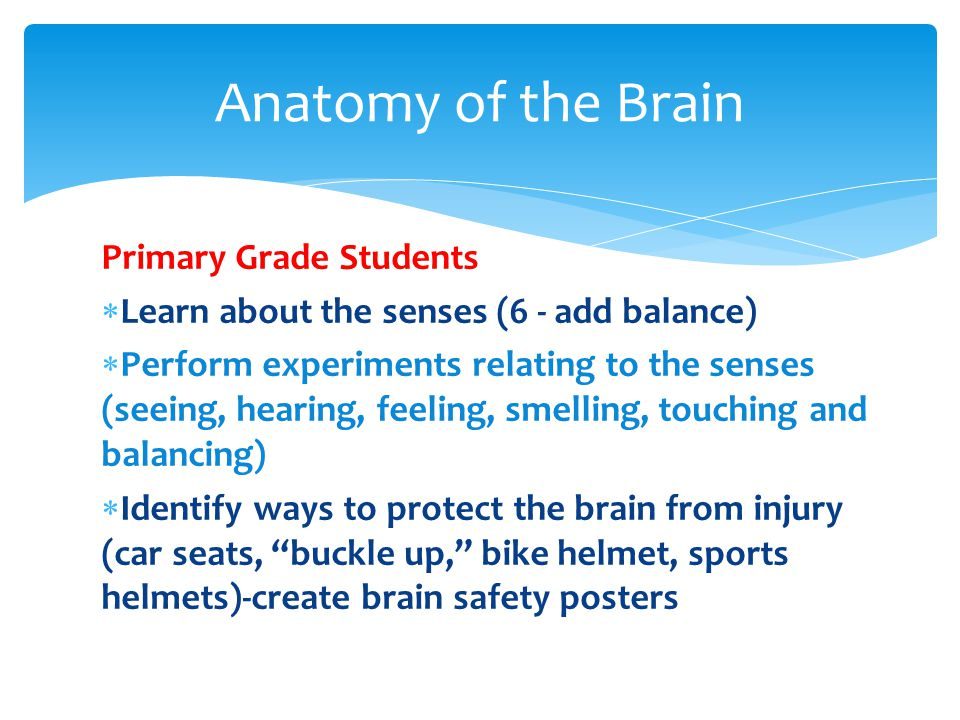 Primary Grade Students  Learn about the senses (6 - add balance)  Perform experiments relating to the senses (seeing, hearing, feeling, smelling, touching and balancing)  Identify ways to protect the brain from injury (car seats, buckle up, bike helmet, sports helmets)-create brain safety posters Anatomy of the Brain