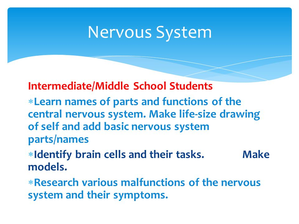 Intermediate/Middle School Students  Learn names of parts and functions of the central nervous system.