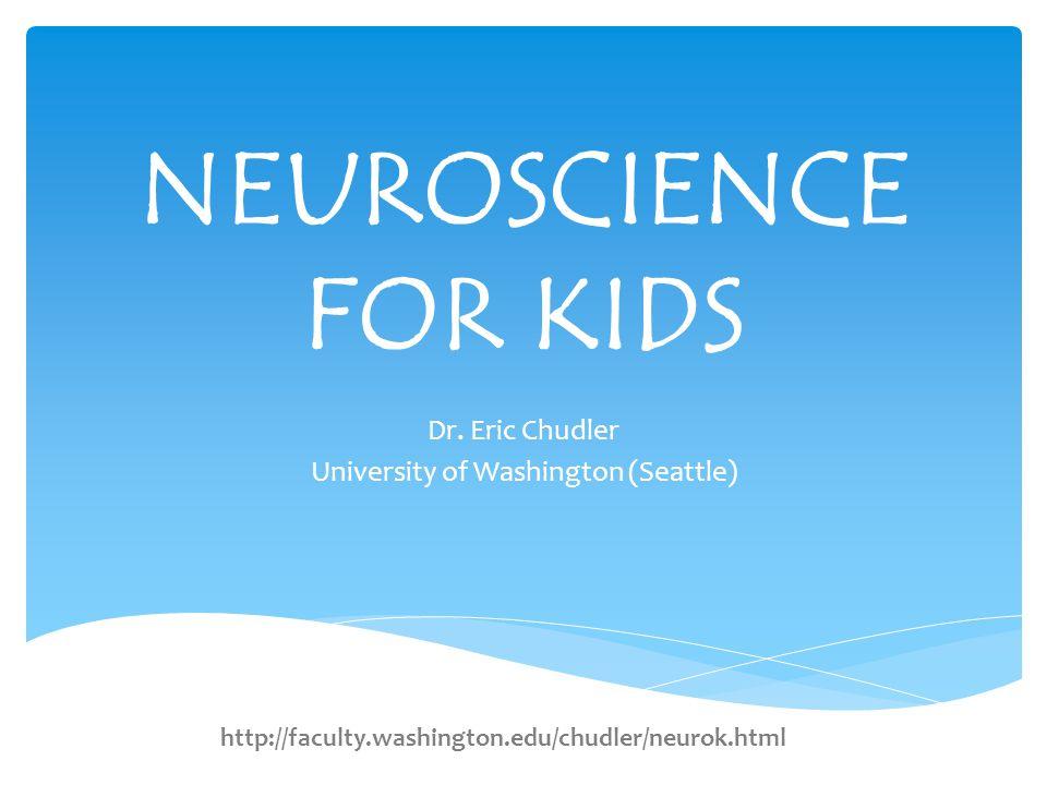 NEUROSCIENCE FOR KIDS Dr.