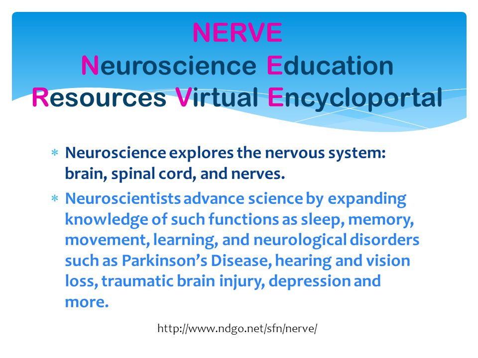  Neuroscience explores the nervous system: brain, spinal cord, and nerves.