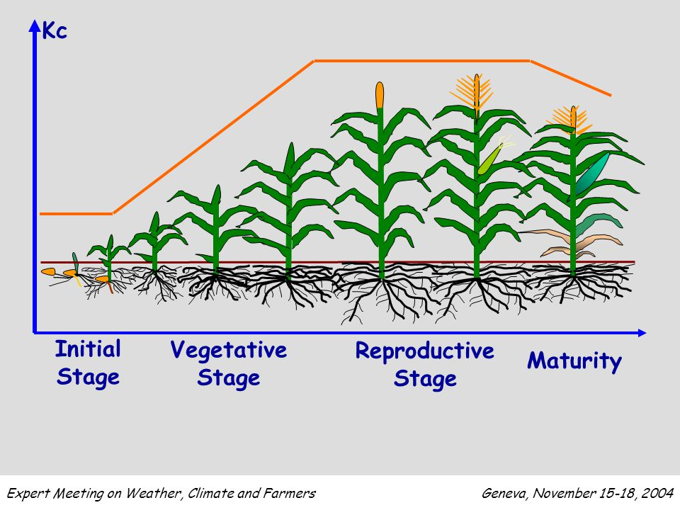 Initial Stage Vegetative Stage Reproductive Stage Maturity Kc