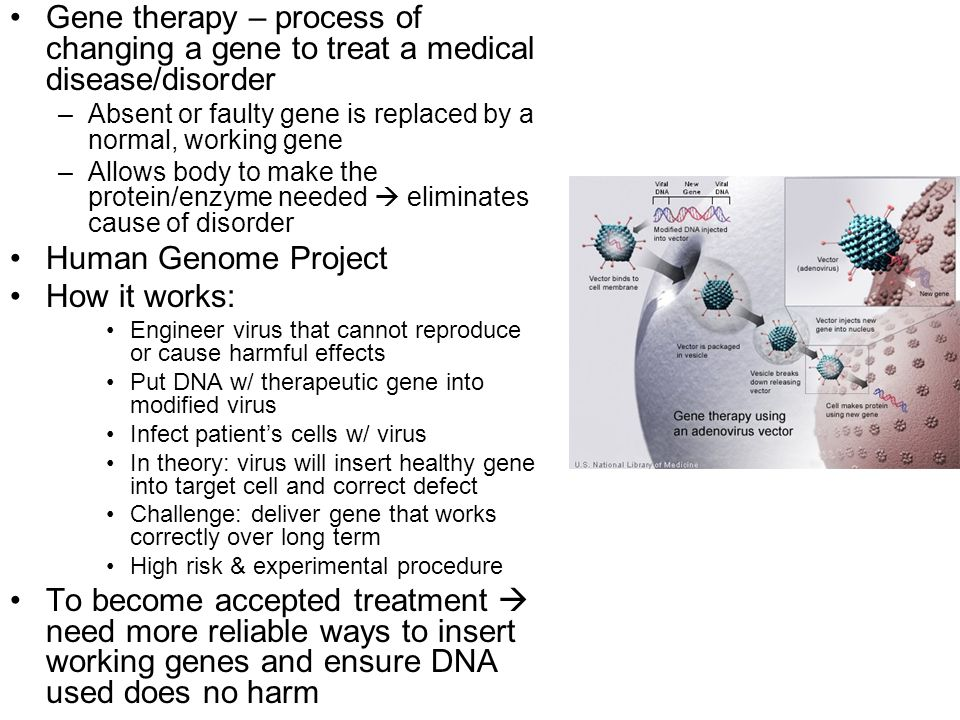 Gene therapy – process of changing a gene to treat a medical disease/disorder –Absent or faulty gene is replaced by a normal, working gene –Allows bod