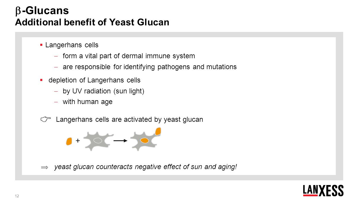 12 Purity for Beauty ▪ Your Partner for Personal Care ▪ Leverkusen, October 2014  -Glucans Additional benefit of Yeast Glucan  Langerhans cells  fo