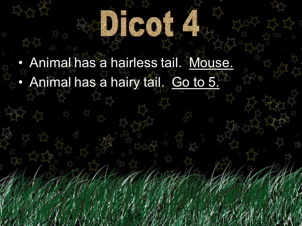 Animal has a long neck. Ostrich.Ostrich. Animal has a short neck. Parrot.Parrot.