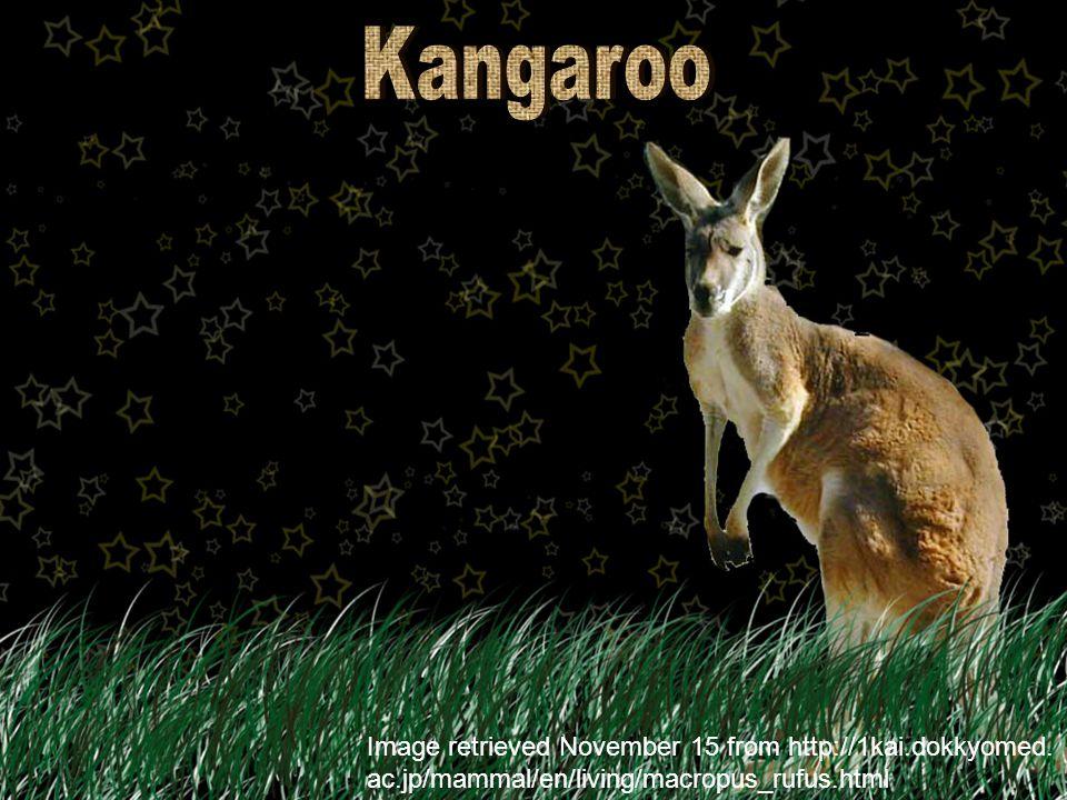 Image retrieved November 15 from http://mom.smugmug.com/keyword/dog