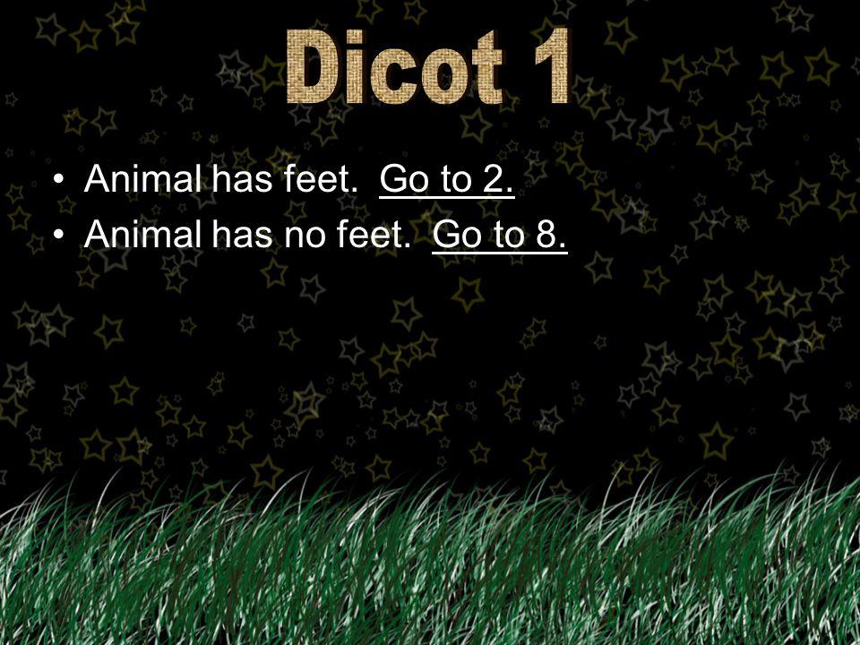 Animal has feet. Go to 2.Go to 2. Animal has no feet. Go to 8.Go to 8.