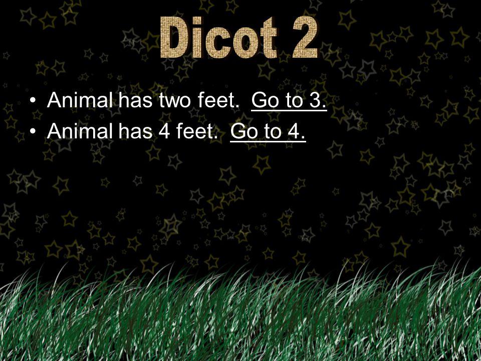 Animal has two feet. Go to 3.Go to 3. Animal has 4 feet. Go to 4.Go to 4.