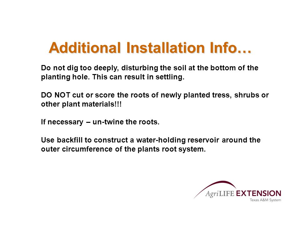 Additional Installation Info… Do not dig too deeply, disturbing the soil at the bottom of the planting hole.