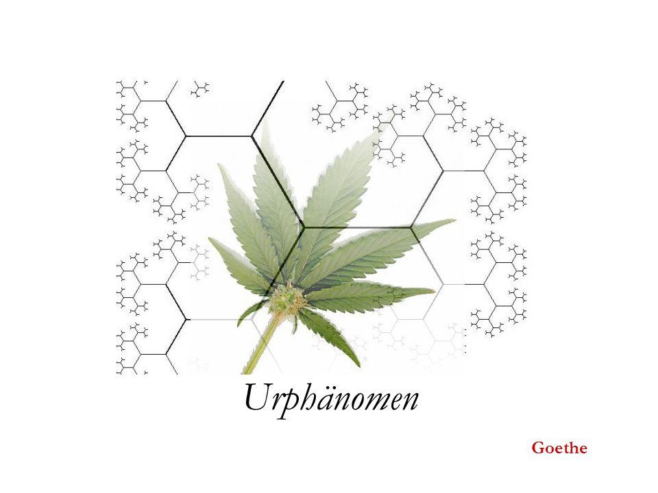 Urphänomen Goethe