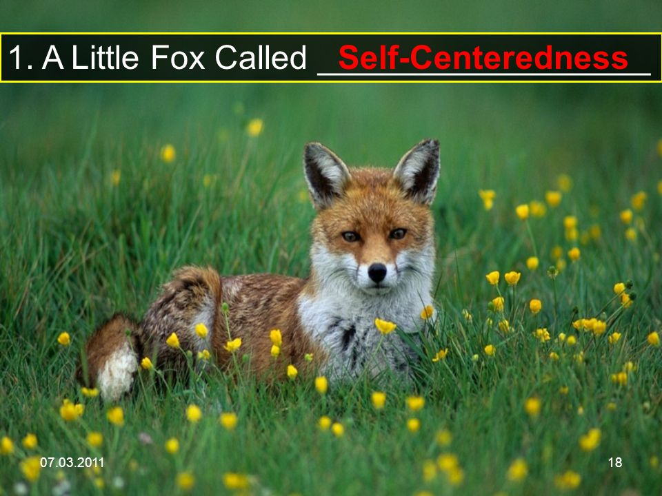 07.03.201118 1. A Little Fox Called __________________ Self-Centeredness