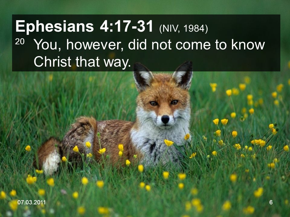 07.03.20117 Ephesians 4:17-31 (NIV, 1984) 21 Surely you heard of him and were taught in him in accordance with the truth that is in Jesus.