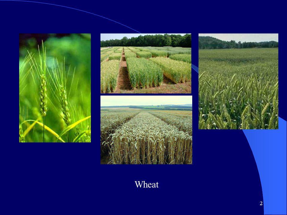 2 Wheat