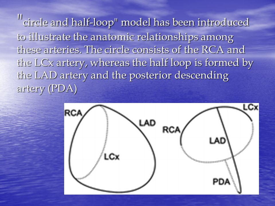 circle and half-loop model has been introduced to illustrate the anatomic relationships among these arteries.