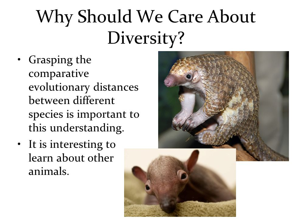 Why Should We Care About Diversity.
