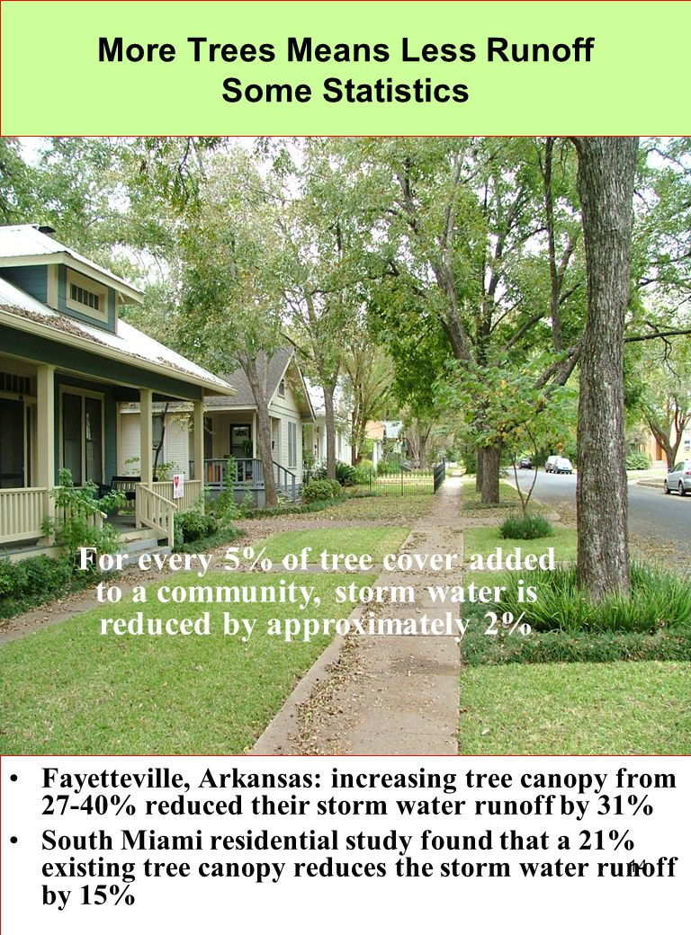 14 More Trees Means Less Runoff Some Statistics Fayetteville, Arkansas: increasing tree canopy from 27-40% reduced their storm water runoff by 31% Sou