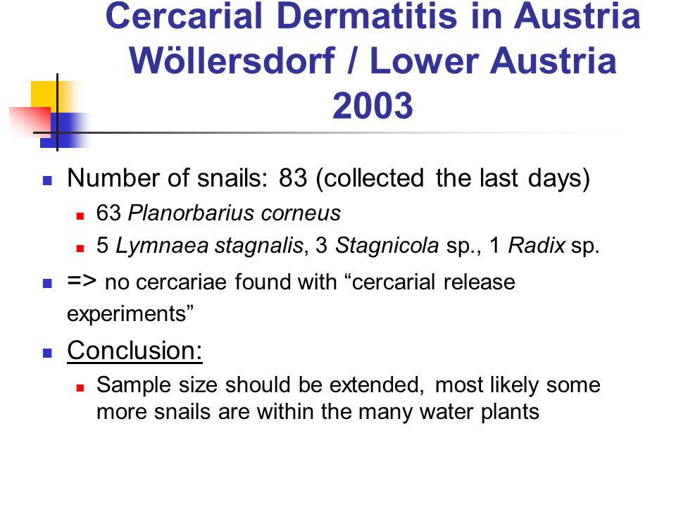 Cercarial Dermatitis in Austria Wöllersdorf / Lower Austria 2003 Number of snails: 83 (collected the last days) 63 Planorbarius corneus 5 Lymnaea stagnalis, 3 Stagnicola sp., 1 Radix sp.