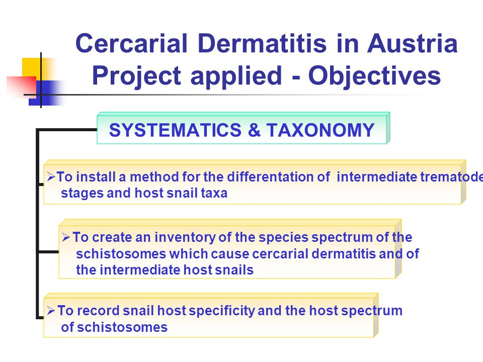 Cercarial Dermatitis in Austria Project applied - Objectives SYSTEMATICS & TAXONOMY To install a method for the differentation of intermediate trematode stages and host snail taxa To create an inventory of the species spectrum of the schistosomes which cause cercarial dermatitis and of the intermediate host snails To record snail host specificity and the host spectrum of schistosomes