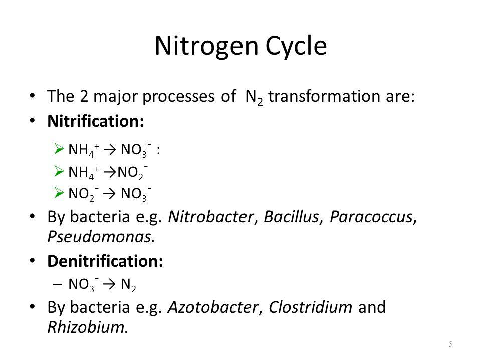 Nitrogen Cycle The 2 major processes of N 2 transformation are: Nitrification:  NH 4 + → NO 3 - :  NH 4 + →NO 2 -  NO 2 - → NO 3 - By bacteria e.g.