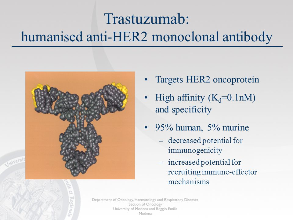 Trastuzumab: humanised anti-HER2 monoclonal antibody Targets HER2 oncoprotein High affinity (K d =0.1nM) and specificity 95% human, 5% murine – decreased potential for immunogenicity – increased potential for recruiting immune-effector mechanisms