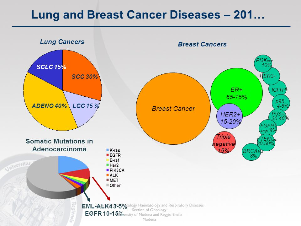 30 LCC 15 %ADENO 40% SCC 30% SCLC 15% Lung Cancers Breast Cancer ER+ 65-75% HER2+ 15-20% Triple negative 15% Breast Cancers HER3+ IGFR1+ P53 mut 30-40% FGFR1 Ampl 8% PTEN loss 30-50% PI3K mut 10% BRCA Mut 8% p95 4-8% Somatic Mutations in Adenocarcinoma EML-ALK4 3-5% EGFR 10-15% Lung and Breast Cancer Diseases – 201…