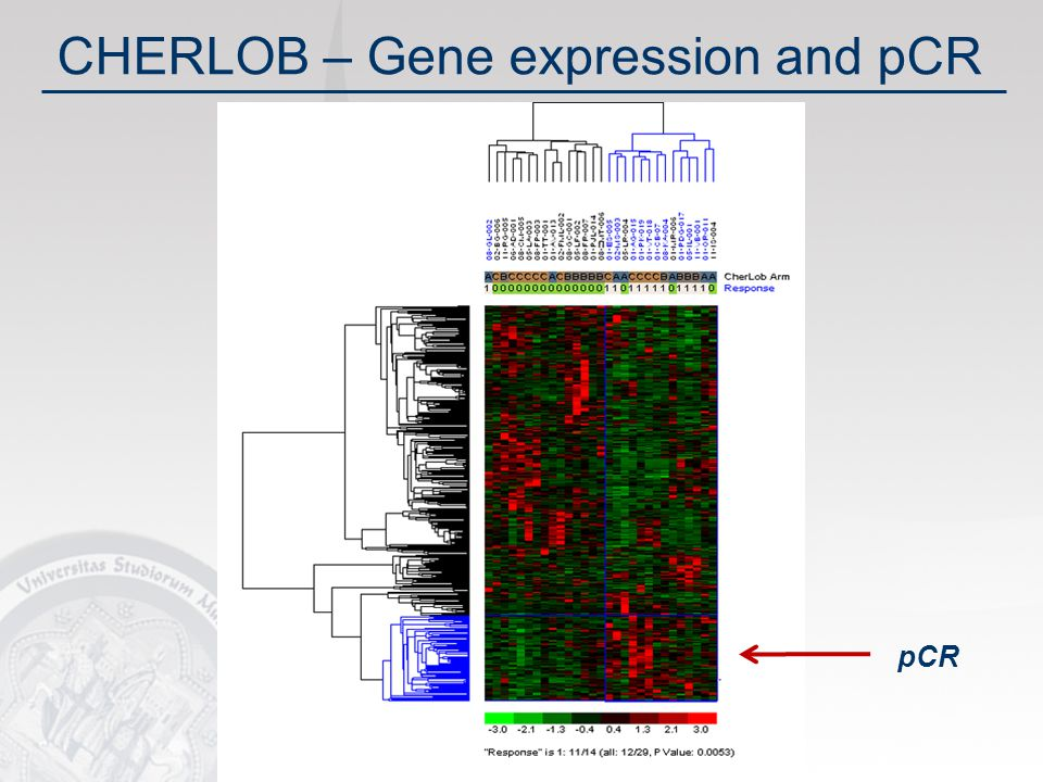 32 CHERLOB – Gene expression and pCR pCR