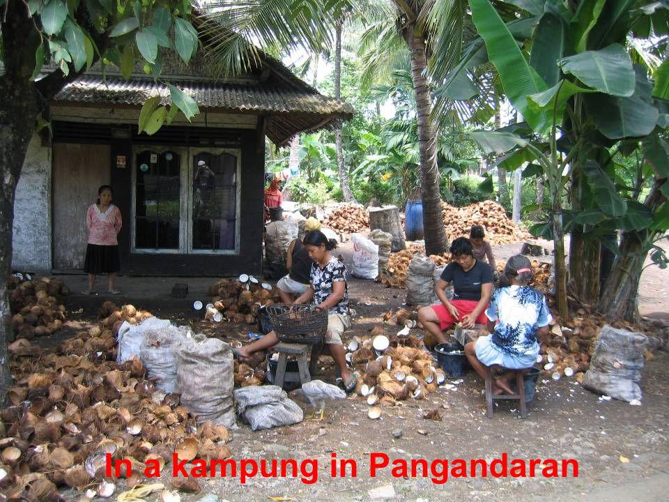 In a kampung in Pangandaran