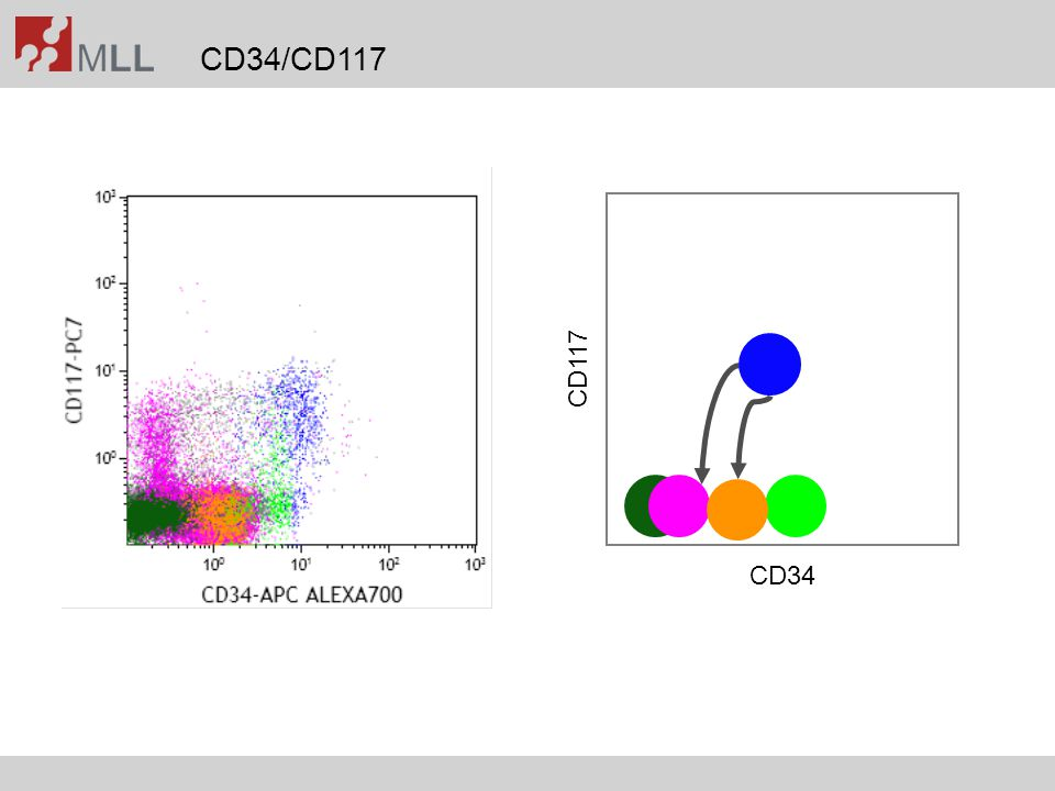 Impact of CD45-gating on sensitivity/specificity Kern et al., Hematol J 2004;5:410-418 without CD45 gatingwith CD45 gating LAIP+LAIP+LDLAIP+LAIP+LD AMLnormal BMAMLnormal BM Median20.86%0.15%2.2620.16%0.02%3.07 Min2.33%0.02%1.092.24%0.01%1.22 Max82.52%0.58%3.3481.94%0.42%4.01