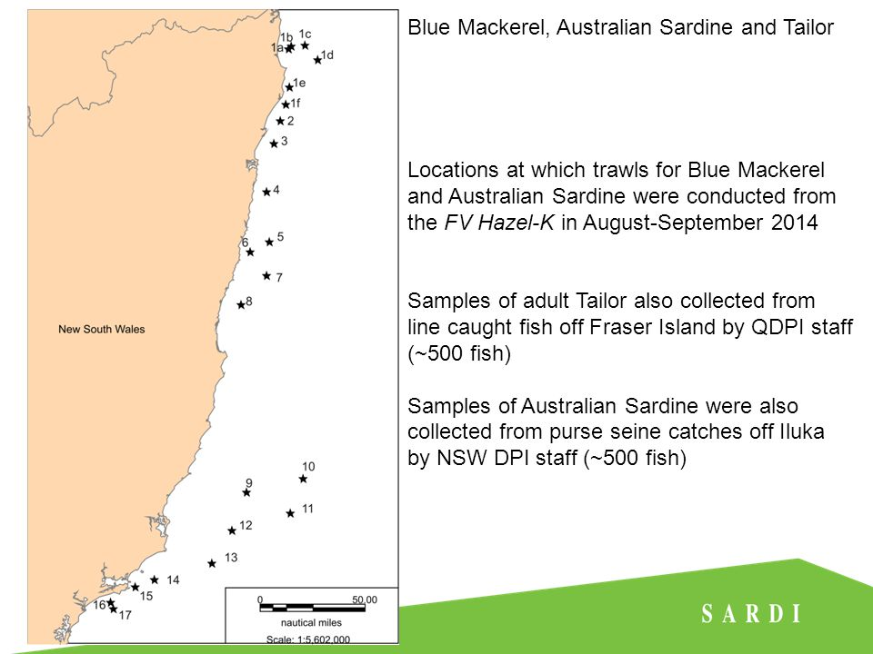 Locations at which trawls for Blue Mackerel and Australian Sardine were conducted from the FV Hazel-K in August-September 2014 Samples of adult Tailor also collected from line caught fish off Fraser Island by QDPI staff (~500 fish) Samples of Australian Sardine were also collected from purse seine catches off Iluka by NSW DPI staff (~500 fish) Blue Mackerel, Australian Sardine and Tailor