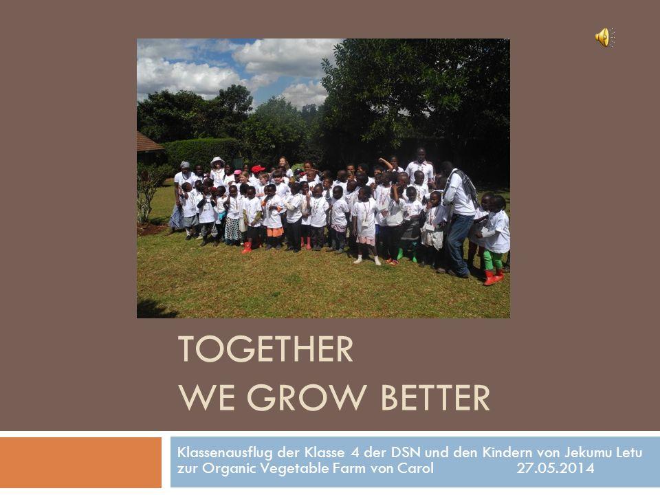 TOGETHER WE GROW BETTER Klassenausflug der Klasse 4 der DSN und den Kindern von Jekumu Letu zur Organic Vegetable Farm von Carol 27.05.2014