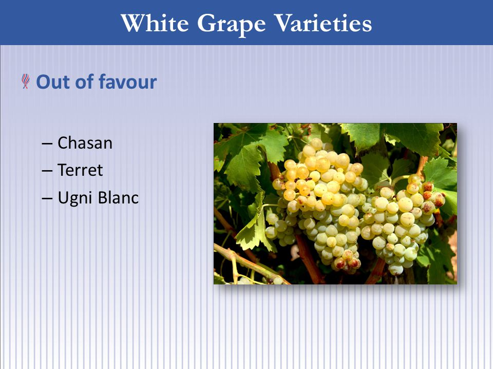White Grape Varieties Out of favour – Chasan – Terret – Ugni Blanc