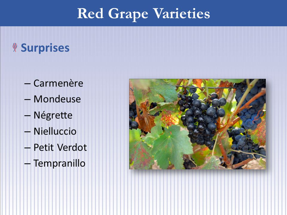Red Grape Varieties Surprises – Carmenère – Mondeuse – Négrette – Nielluccio – Petit Verdot – Tempranillo
