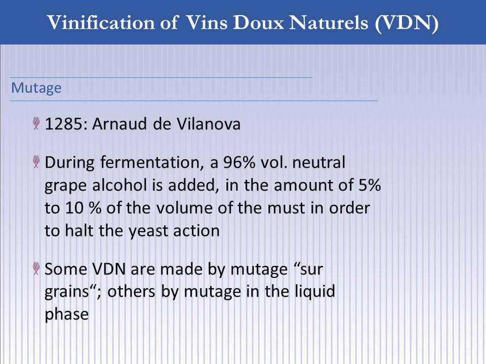 Vinification of Vins Doux Naturels (VDN) 1285: Arnaud de Vilanova During fermentation, a 96% vol.