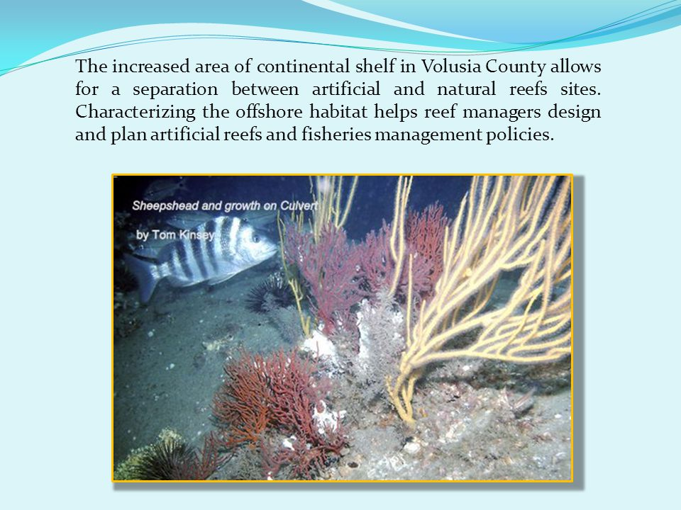 The increased area of continental shelf in Volusia County allows for a separation between artificial and natural reefs sites.